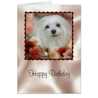 Snowdrop la tarjeta de cumpleaños maltesa