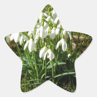 Snowdrops 02,2 (Schneegloeckchen) Pegatina En Forma De Estrella