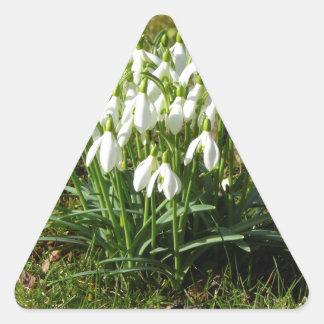 Snowdrops 02,2 (Schneegloeckchen) Pegatina Triangular