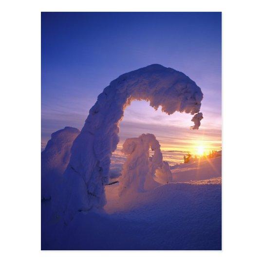 Snowghosts en la gama del pescado blanco de postal