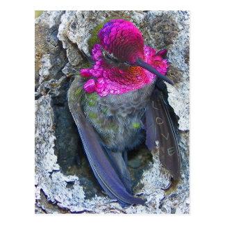 Sobre las alas del amor… tarjetas postales