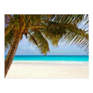 Sol del cielo azul del paraíso de la palma postal