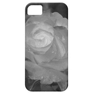 Sola flor color de rosa con las gotitas de agua en funda para iPhone SE/5/5s