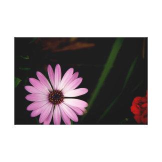 Sola flor de la lavanda en lona impresión en lienzo