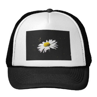 Sola flor de la margarita blanca en fondo oscuro gorro de camionero