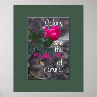 Sola fotografía color de rosa rosada de doblez póster