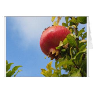 Sola fruta roja de la granada en el árbol en hojas tarjeta
