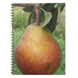 Sola pera roja que cuelga en el árbol cuaderno
