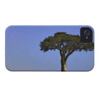 Solo árbol del acacia en los llanos herbosos Masa