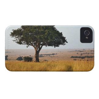 Solo árbol del acacia en los llanos herbosos, Masa iPhone 4 Case-Mate Protectores