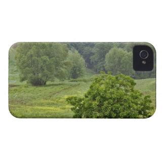 Solo árbol en el campo de granja agrícola, Toscana iPhone 4 Cárcasa