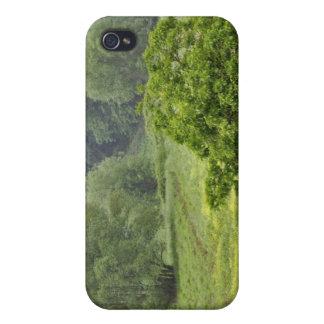 Solo árbol en el campo de granja agrícola, Toscana iPhone 4 Cobertura
