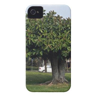 Solo árbol en jardín iPhone 4 Case-Mate carcasas
