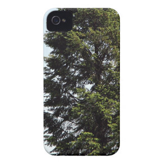 Solo árbol en parque iPhone 4 Case-Mate coberturas