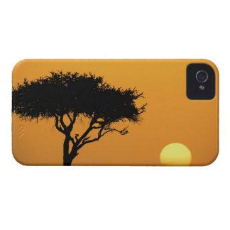 Solo árbol silueteado en la salida del sol, Masai  iPhone 4 Cobertura