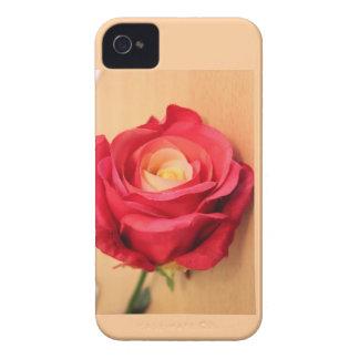 Solo color de rosa hermoso en iphone iPhone 4 protectores
