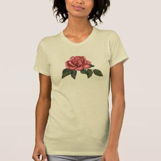 Solo color de rosa rosado: Dibujo de lápiz del Camisas