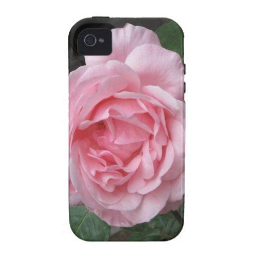 Solo color de rosa rosado - fotografía vibe iPhone 4 carcasa