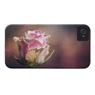 Solo color de rosa rosado iPhone 4 protectores