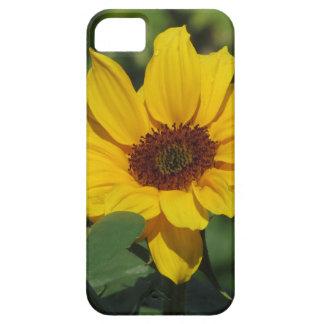 Solo girasol amarillo con las hojas verdes funda para iPhone SE/5/5s