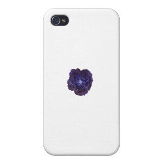 Solo rosa de té azul marino iPhone 4/4S carcasa