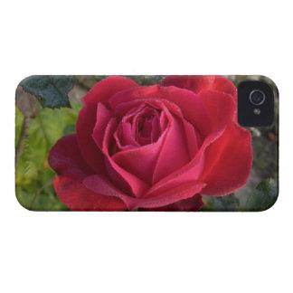 solo rosa rojo con rocío Case-Mate iPhone 4 carcasa