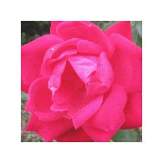 Solo rosa rojo impresión en lienzo