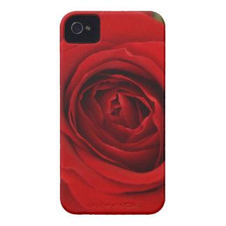 Solo rosa rojo iPhone 4 funda