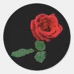 Solo rosa rojo pegatina redonda