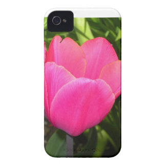 Solo tulipán rosado iPhone 4 Case-Mate protectores