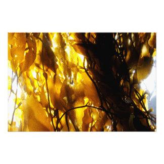 Sombras 3 del quelpo foto
