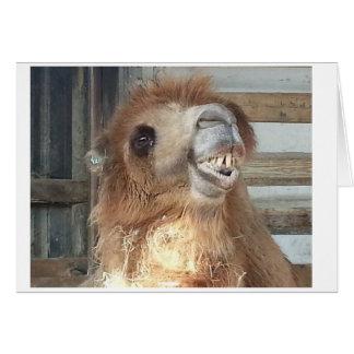 Sonrisa del camello tarjeta de felicitación