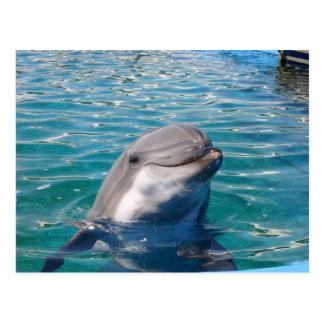 Sonrisa del delfín postal