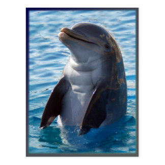 soporte del delfín postal