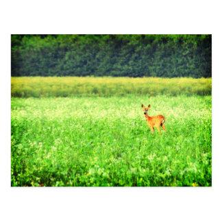 Sorprendido, ciervos en los campos Lomo Postal