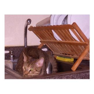 Sous-Cocinero del gato que oculta en el fregadero Tarjetas Postales