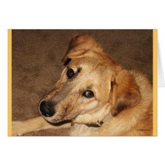 Soy disculpa triste de los ojos del perro de tarjeta de felicitación