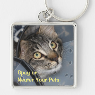 Spay o neutralice el llavero lindo del gatito