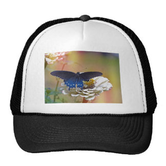 Spicebush Swallowtail Gorro