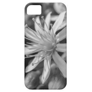SpringFlower Funda Para iPhone SE/5/5s