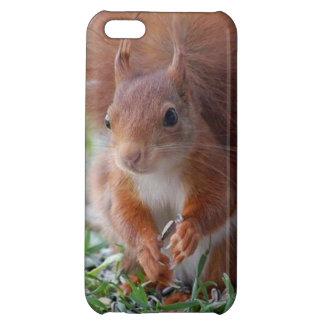 Squirrel ardilla Écureuil