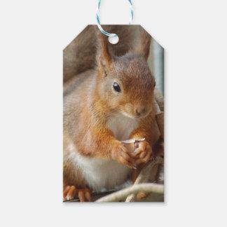 Squirrel ~ Écureuil ~ ardilla ~ GLINEUR Etiquetas Para Regalos