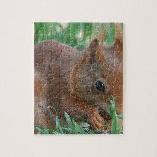 Squirrel - Jean Louis Glineur Photography Puzzle
