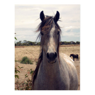 Star_The_Horse, _ Postal