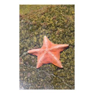 starfish.JPG de vida Papelería