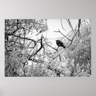 Starling en un árbol congelado póster