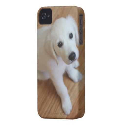 Su mascota en un caso iPhone 4 fundas