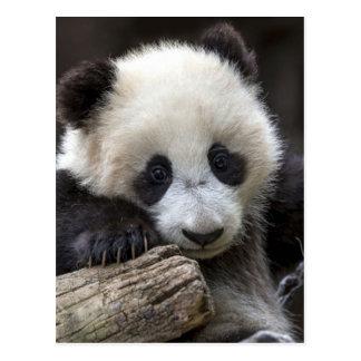 Subida de la panda del bebé un árbol postal