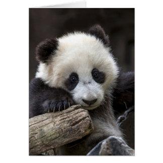 Subida de la panda del bebé un árbol tarjeta pequeña