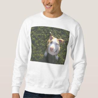 Sudadera terrier de PitBull del americano que mira para